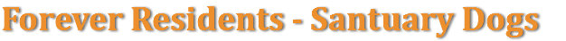 Forever Residents - Santuary Dogs